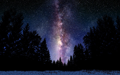 Milky Way Over Forest