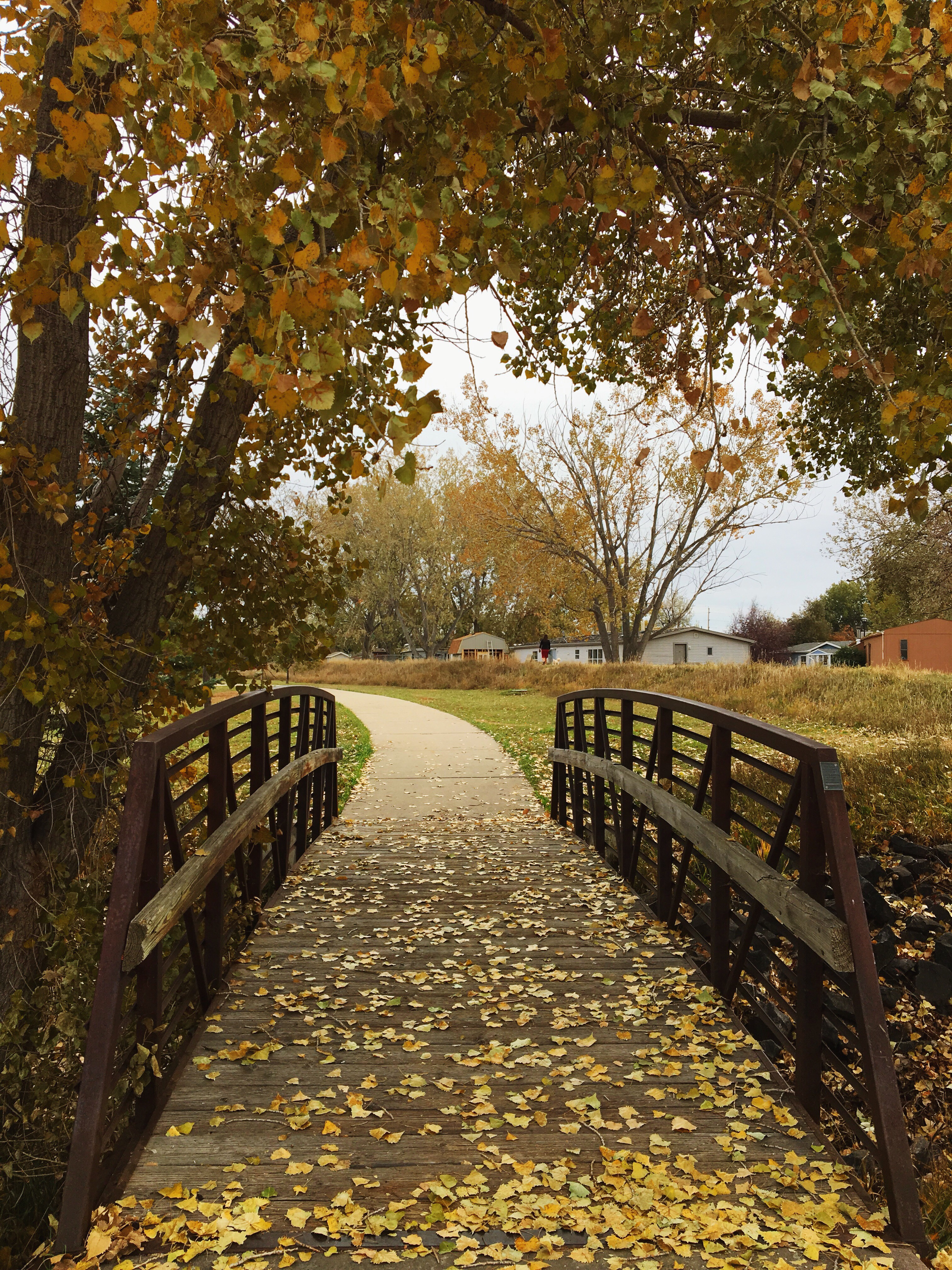 Wooden bridge and autumn leaves